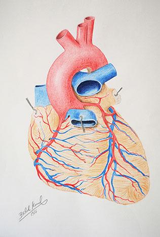 Belal-Kemal-Heart-Illustration